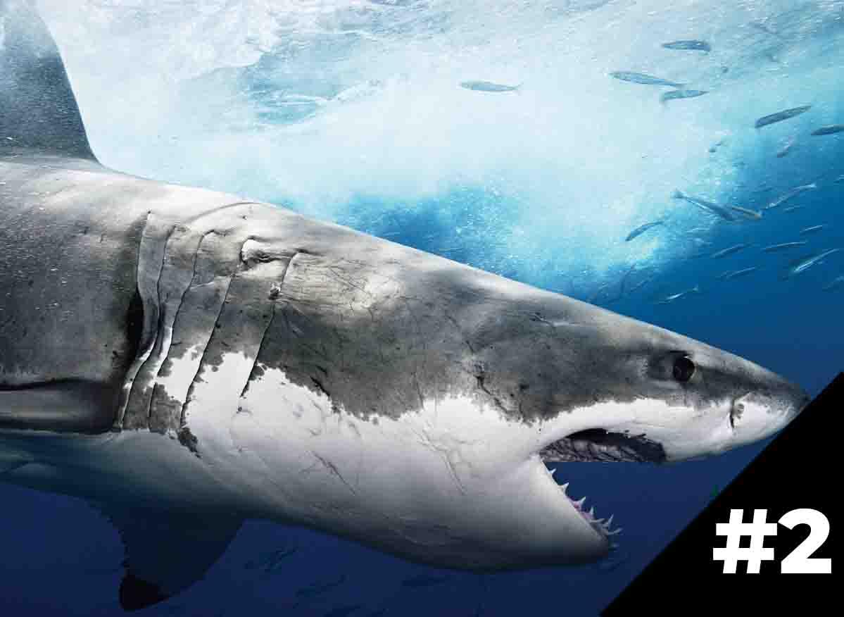 11+ советов для создания сайта-акулы продаж, ч.2